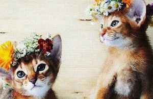 Hippie Chic Animals We Love