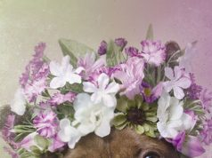 Pit Bull Wearing A Flower Crown