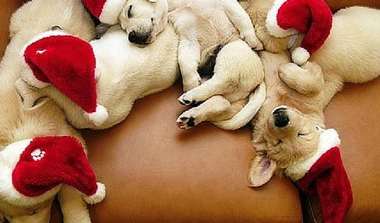 10 Of The Cutest Animals Showing Their Christmas Spirit