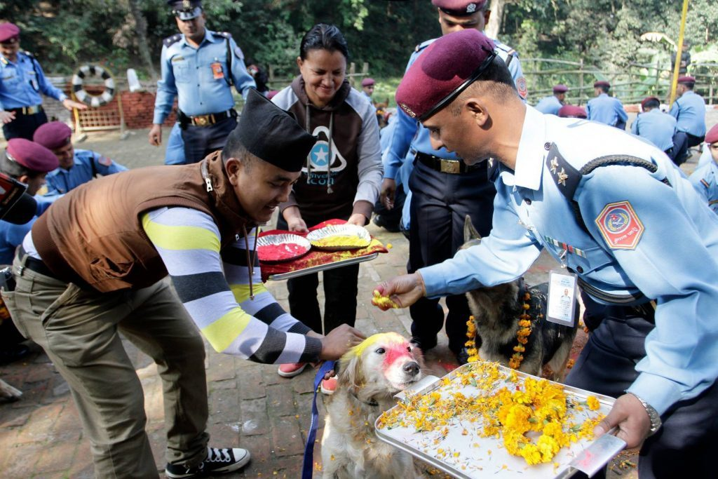 Dog getting fed during Nepali festival