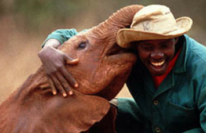 Playing Mom To Orphaned Baby Elephants