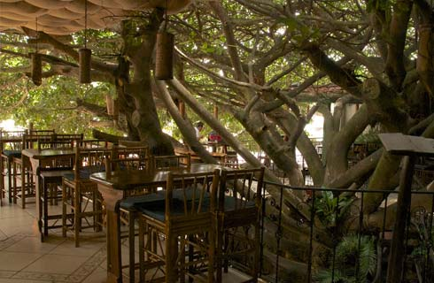 tree house restaurants