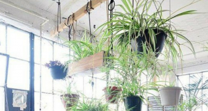 9 Plants That Clean Air And Perfect For The Forgetful Growers