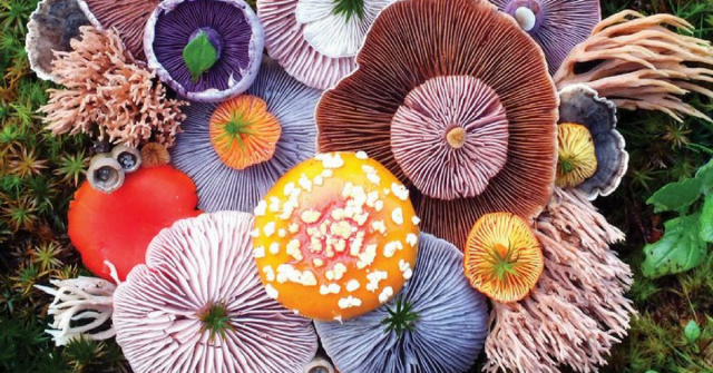 Photographer Takes Stunning Photos of Wild Mushroom Arrangements and It's Beautiful