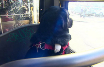 Seattle's Adorable Hairy Commuter Rides the Bus to the Park Everyday
