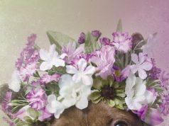 Pit Bull Wearing A Flower Crown