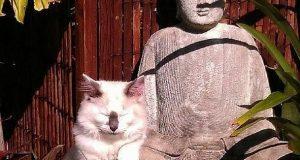 11 Zen Animals To Inspire